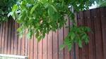 плътни дървени огради